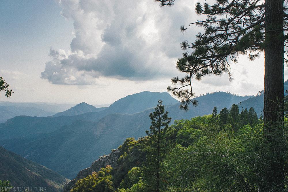sequoia09