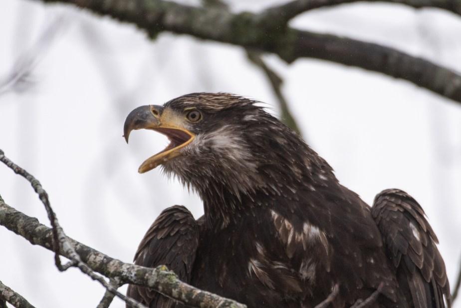 December Birding in BC