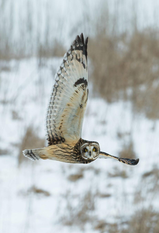 International Owl Awareness Week