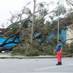 An onlooker examines a building crushed by a fallen tree.