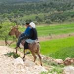 Going Home from School, Duma, Palestine
