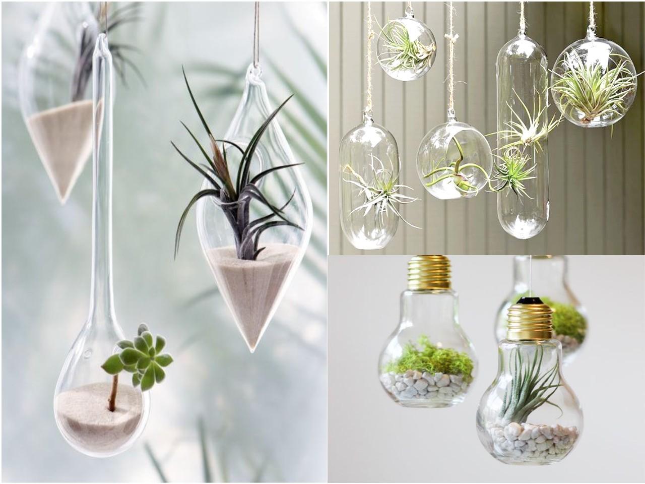 10 ideas de decoracin con plantas colgantes