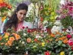 Salaire minima fleuriste au 1er janvier 2016