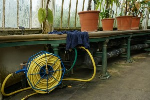 Tuyau jaune, Kew Garden #2