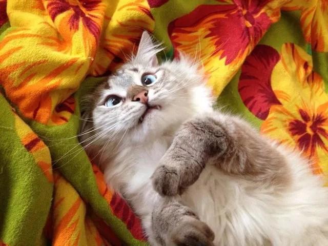 OMG, it's #caturday