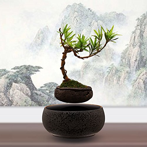 LEVITATING BONSAI  Didnt Know I Wanted That