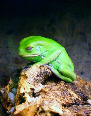 sad_frog_by_avmaier