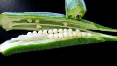 Die gesundheitlichen Vorteile von Okra