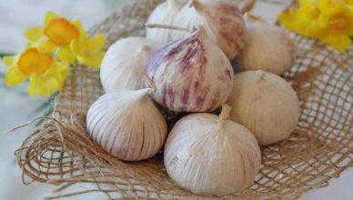 5 Gründe warum wir jeden Tag Knoblauch essen sollten