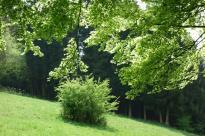 Huppenbroicher Wald