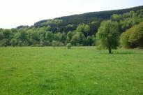 Weide am Huppenbroicher Wald