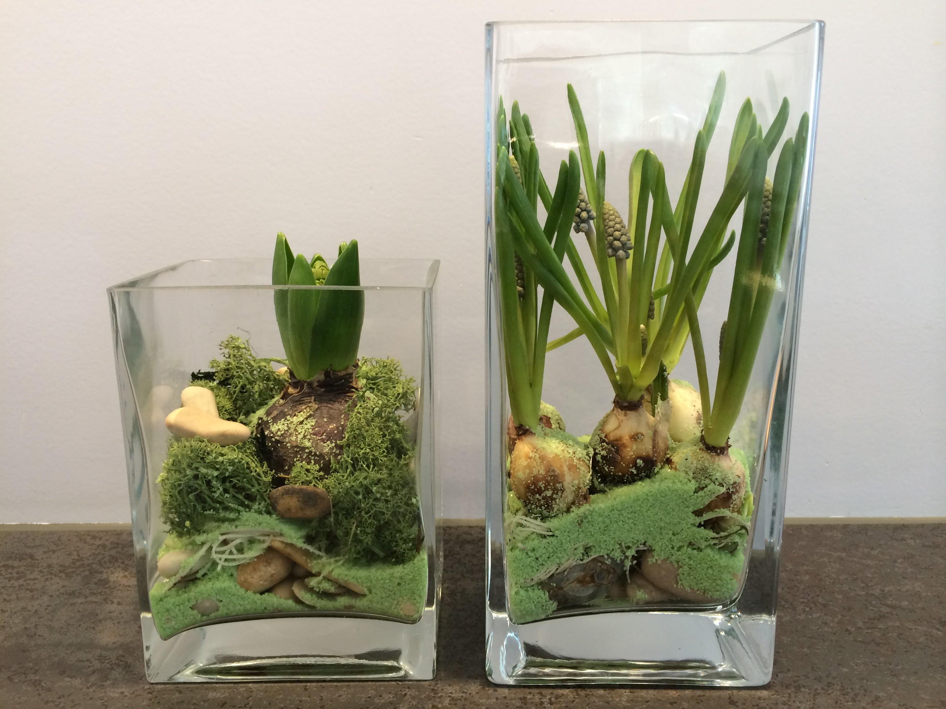 Biologiestunde in der Stube Blumenzwiebeln im Glas