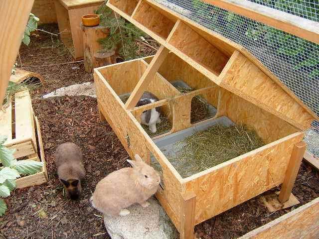 Kaninchenstall Gross Selber Bauen