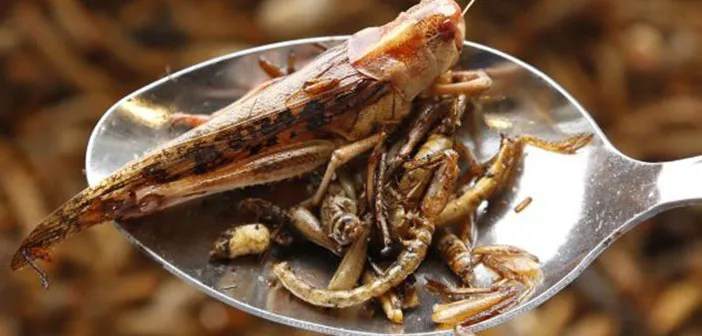 For the UN food based insect is cheap, sustainable and nutritious
