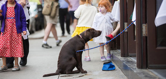 Until recently dogs had vetoed the entrance at restaurants in the Big Apple, something that raised such a multitude of criticism from the population neoyorkina.