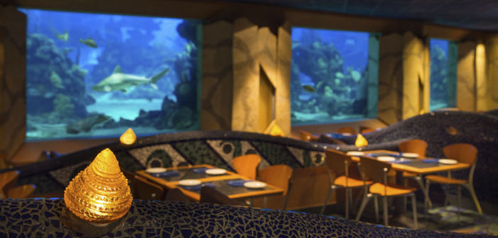 The dining room is dominated by a large coral reef full of sea creatures that mesmerize even the most astute customers, In addition the menu revolves around the flavors of the sea.