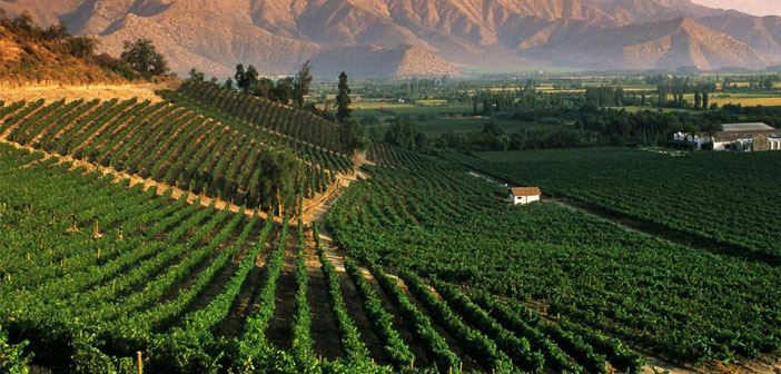 Mendoza is the most productive wine region in Argentina with 70% wine country. In the last decades, They have achieved a high international level and are recognized experts such as Parker or Suckling and wide acceptance of the most demanding markets.