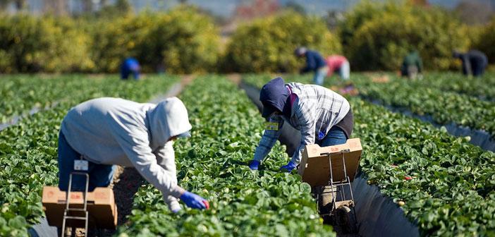 Vaut la peine d'examiner les coûts de la nourriture en Californie. Dans ce fermes d'Etat sont plus proches des points de consommation si les frais de transport sont moins élevés.