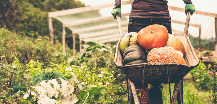 Selon les données publiées récemment par le Service de recherche économique du ministère de l'Agriculture EE. UU., de chaque dollar déboursé par le consommateur final seulement measly 7.8 cents finissent entre les mains des agriculteurs.