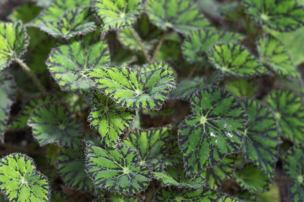 Bedrfnisse von Pflanzen Was Bltter uns sagen  Majas