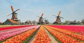 Hollanda'da ikinci aşamaya 19 Mayıs'ta geçilebilecek