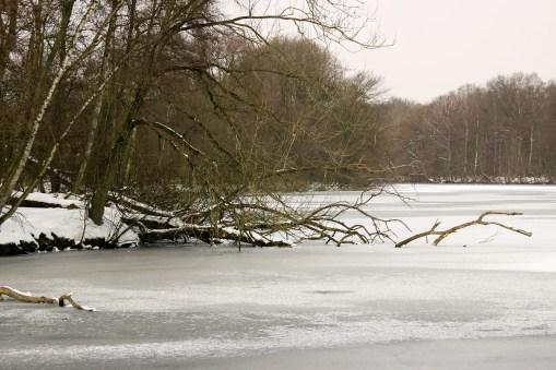 Bramfelder Winterlaufserie_17.03.2013 008