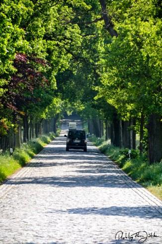 """Die """"Deutsche Alleenstraße"""" beginnt auf Rügen und endet am Bodensee. Foto: Flora Jädicke"""