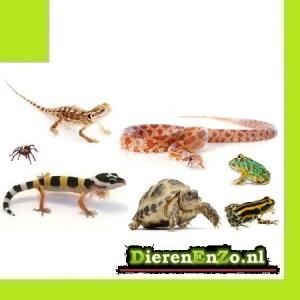 Reptielen en Amfibieen