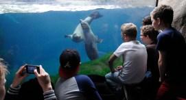 Cool bij de zeeleeuwen