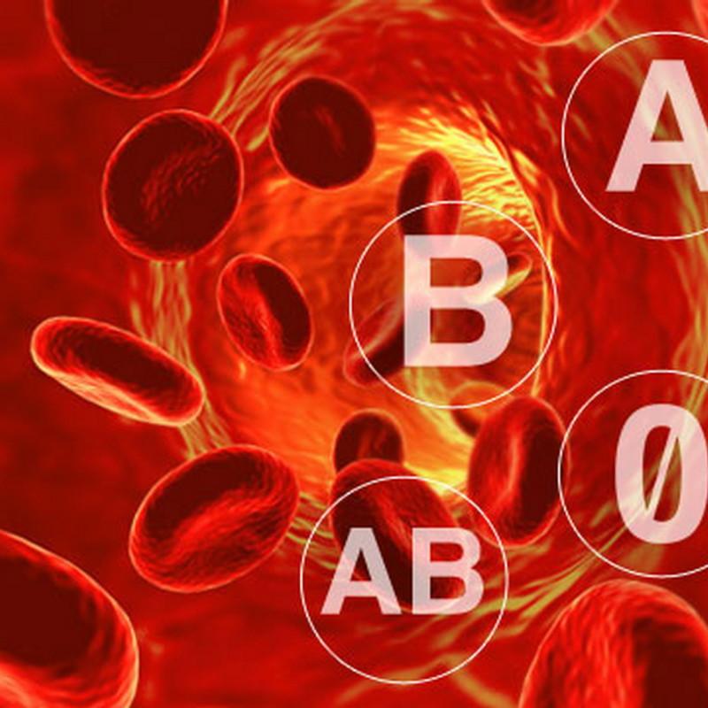 Dieta del gruppo sanguigno del dottMozzi funziona  Dietaokit  Dieta e alimentazione sana