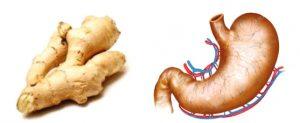 Imagini pentru ghimbirul care seamana cu organele