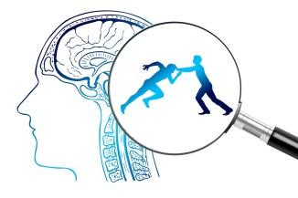 cortex pubers