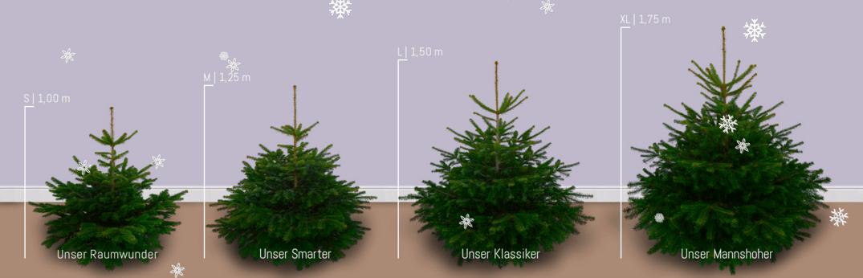 hast du schon einen weihnachtsbaum selbst den kann man. Black Bedroom Furniture Sets. Home Design Ideas