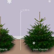 Im Test: Tante Tante Online-Shop für Weihnachtsbäume