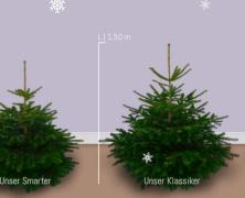 Hast Du schon einen Weihnachtsbaum? Selbst den kann man online bestellen…