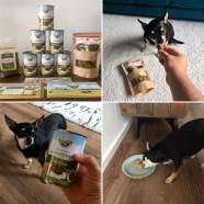 Wir verlosen drei Futterpakete von Bellfor – Hundefutter mit Insekten