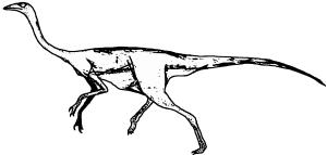 Struthimimus (Männchen)