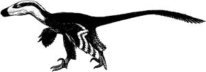 Acheroraptor Weibchen