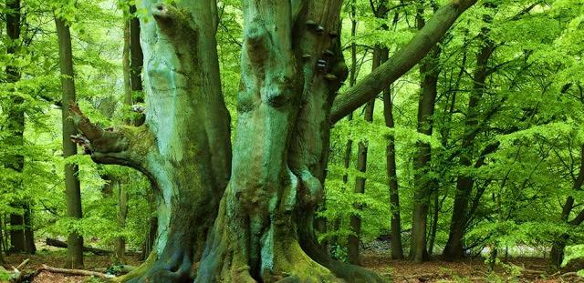 Eichen Buchen Wald