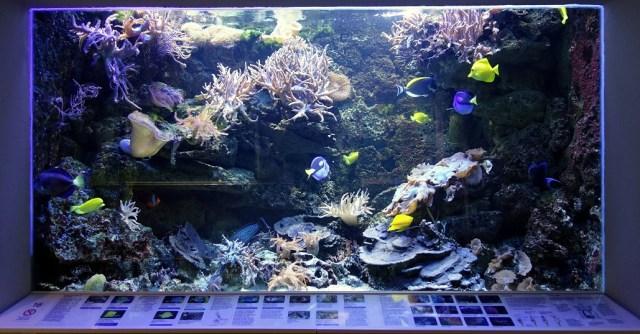 Braunschweig Aquarium