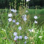 Difference Between Annual and Perennial Plants