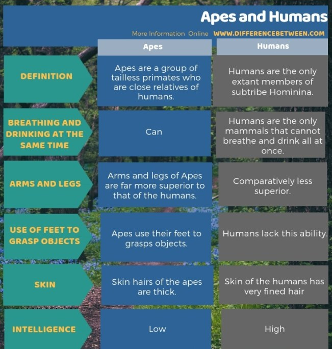 Difference Between Apes and Human in Tabular Form