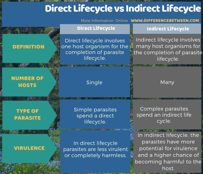 Difference Between Direct Lifecycle and Indirect Lifecycle in Tabular Form