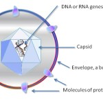 Difference Between Virus and Prion