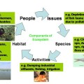 Difference Between Ecological and Environmental