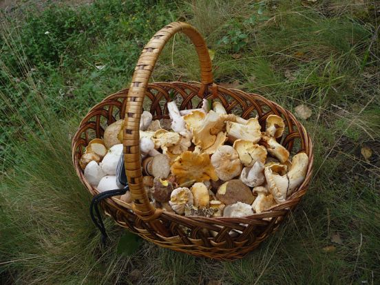 Key Difference Between Mushrooms and Toadstools