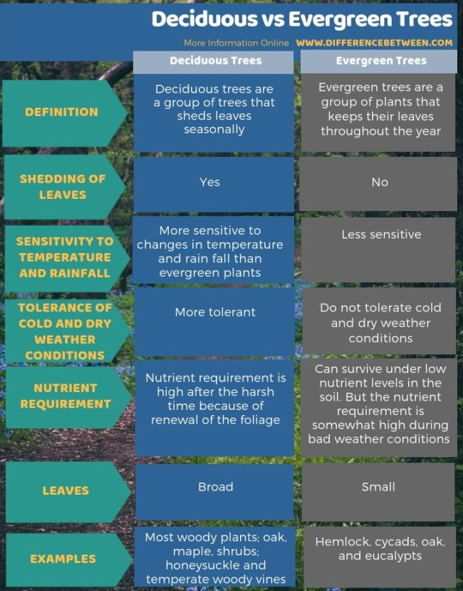 Difference Between Deciduous and Evergreen Trees in Tabular Form