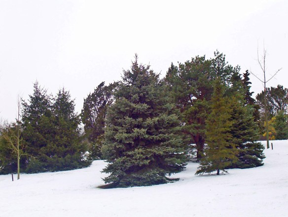 Key Difference - Deciduous vs Evergreen Trees