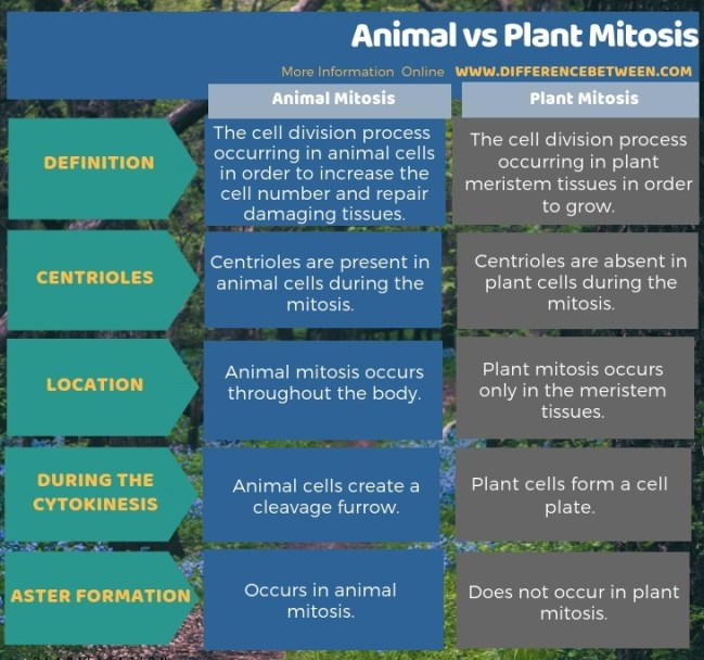 Difference Between Animal and Plant Mitosis in Tabular Form
