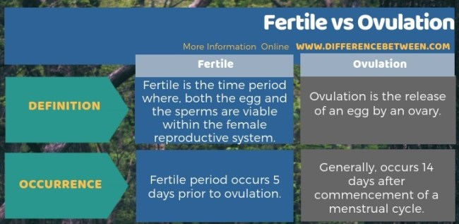 Difference Between Fertile and Ovulation in Tabular Form